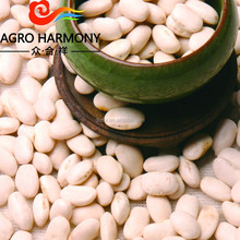 White Kidney Beans Square type