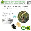 Cas 59-92-7 extracto de hierbas tipo L-DOPA mucuna pruriens semillas venta