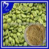 Green Coffee (Coffea Arabica)45% Chlorogenic Acid