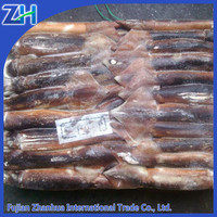 Top shell frozen illex squid fishing bait