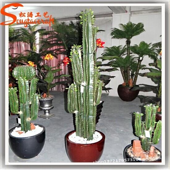 En gros jardin fournitures tous types de cactus noms for Type de plante