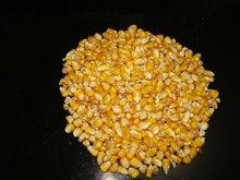 Yellow Corn Animal Feed Price