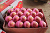 Fresh China Wholesale Fuji Apple Fruit Price