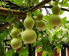 Mango Fertilizer Calcium Boron Amino Acid Chelate