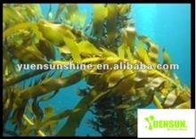 ascophyllum nodosum o estratti di alghe in polvere