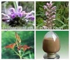 Herba Leonuri Extract