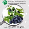 Vitex Extract, Chasteberry Extract Powder of 5% Vitexin