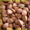 China bulk wholesale buckwheat, buckwheat husk pillow, Inner Mongolia origin