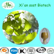 100%Natural ginkgo biloba leaf extract powder