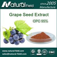 GMP Factory Direct Supply Grape Seed P.E Powder OPC 95%