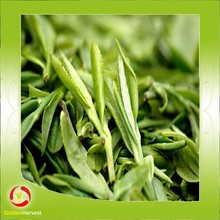 Chinese 100% natural yerba mate tea , mate tea extract