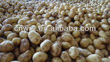 China diffierent size of potato