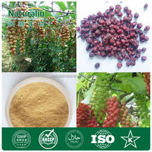 Industrial Grade Chinese Gall Powder Extract 80-83% Tannic acid powder