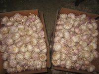 Shandong Fresh Garlic