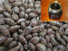Rubber Seed Oil
