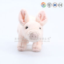 Bedding Baby Pig For Sale