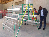 china factory Poultry Farm Layer Chicken Cage