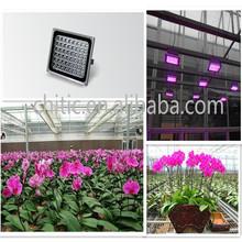 Multi-color LED rose flower light, orchid,tulip,gerbera light