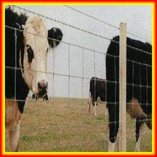 HOT!!! horse fence/farm/grassland wire mesh fence(Animal wire mesh fence)