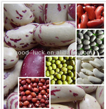 Bulk All Types of Dried Beans