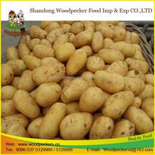 fresh Potato supplier!!! cheap China potato prices