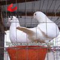Pigeon Racing Products