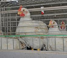stainless steel bird cage wire mesh/bird cage materials/