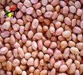 chinês baisha semente do amendoim
