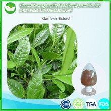Top Quality Pure Uncaria Gambier Extract