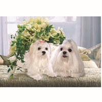 New Products Super Fashion Friendly And Cute 3d Dog Pictures