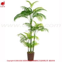 Wholesale Indoor bonsai trees bonsai plant sale bonsai plants