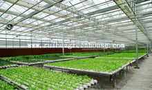 ISO9001:2008-galvanized steel frame Agriculture glass green house