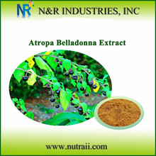 Reliable supplier atropa belladonna extract Hyoscyamine
