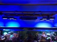 130W Full Spectrum cree Pharosled LED aquarium plant lighting
