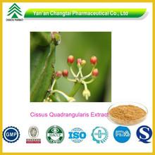 UV Certificated High Quality Herbal Cissus Quadrangularis Extract