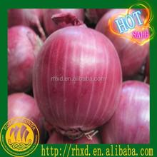 Golden Onion Red Onion