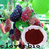 Fresh seasonal Mulberry Extract Juice Powder