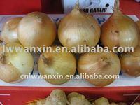 yellow fresh onion in November
