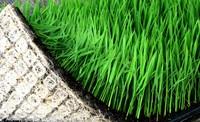 Wholesale Nursery Pots Plastic Propagator Hydroponic Vegetable Seedling Tray