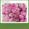 Wholesale garlic exported to dubai,japanese garlic