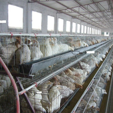 A Frame Layer Poultry Cages In Nigeria