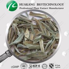 supply Canarium album Raeusch. 50% oleuropein Olive Leaf Powder