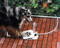 OEM package new design top paw pet animal dog water fountain