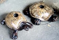 Turtle Egg Shell