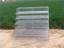 laboratory animal cage/Manufacturer kennel galvanized animal cage parrot cage