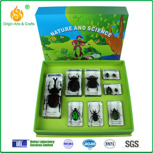 chafer beetle biological teaching aids