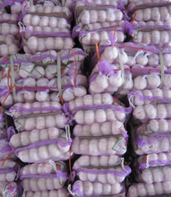 Red Garlic (250g * 20 /mesh bag- for Algeria market)