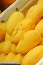 Sindhri chaunsa dosari anwer ratool langra Sweet Mangoes Honey Mangoes Fresh Mangoes from Pakistan