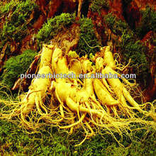 Ginseng leaf extract from GMP ISO HACCP certified manufacture