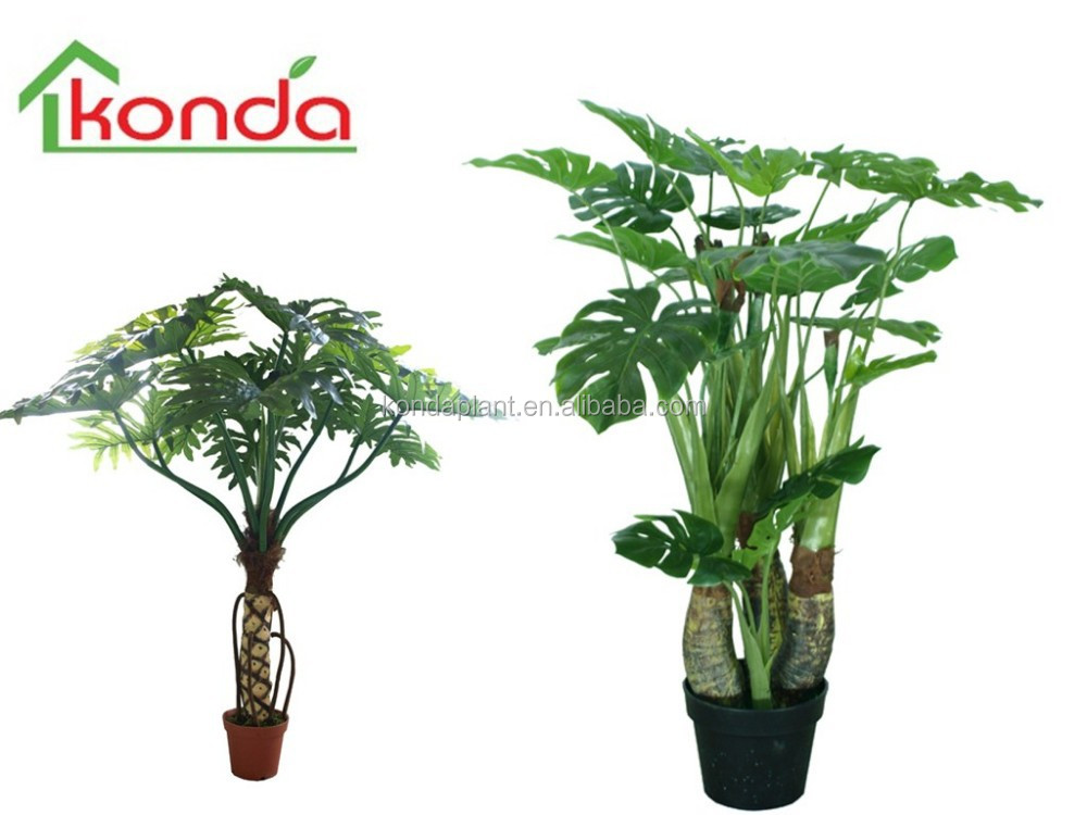 Flores arboles y plantas para interiores daa for Plantas decorativas para interiores